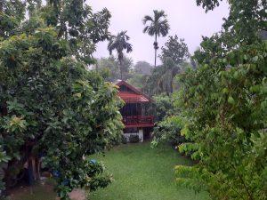 Garten im Regen
