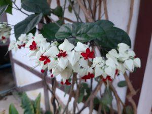 Blüten Thavonesouk