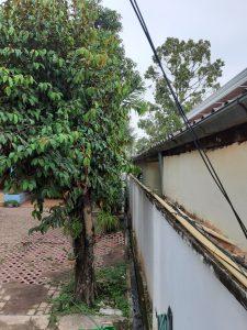 Baum an Mauer